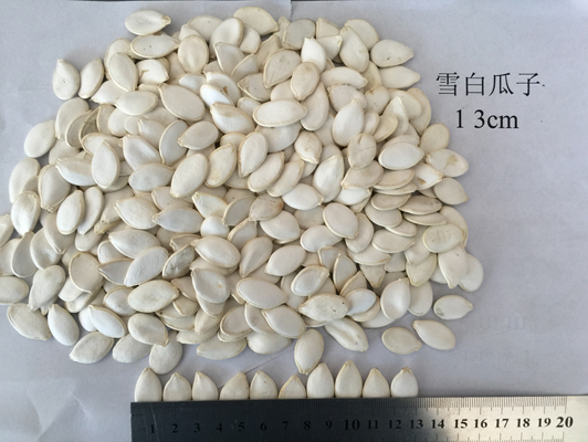 雪白瓜子13cm White melon seeds, 13.jpg
